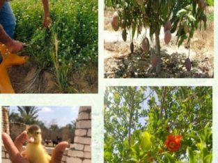 مزرعة للبيع بالتقسيط