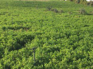 اراضي زراعية بأقل نسبة ملوحة
